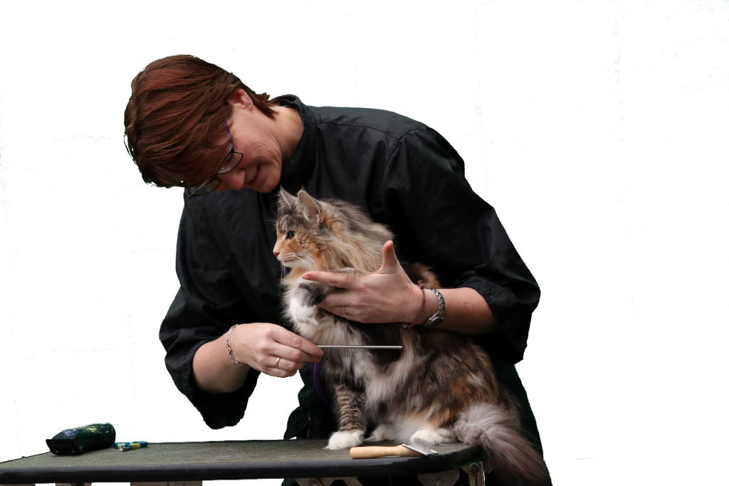 katten trimmen Kattentrimbus